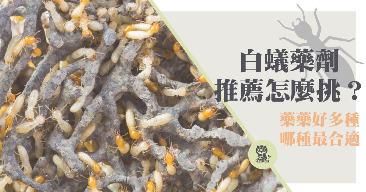 白蟻藥劑、藥水、藥餌推薦哪種?白蟻藥餌推薦購買這款好物