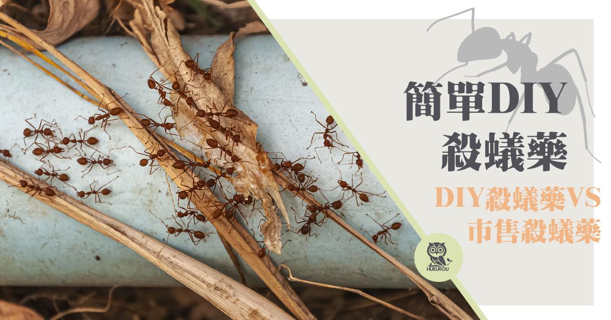 如何殺螞蟻,DIY方法跟殺螞蟻藥一樣有效嗎?殺螞蟻推薦你這樣做!