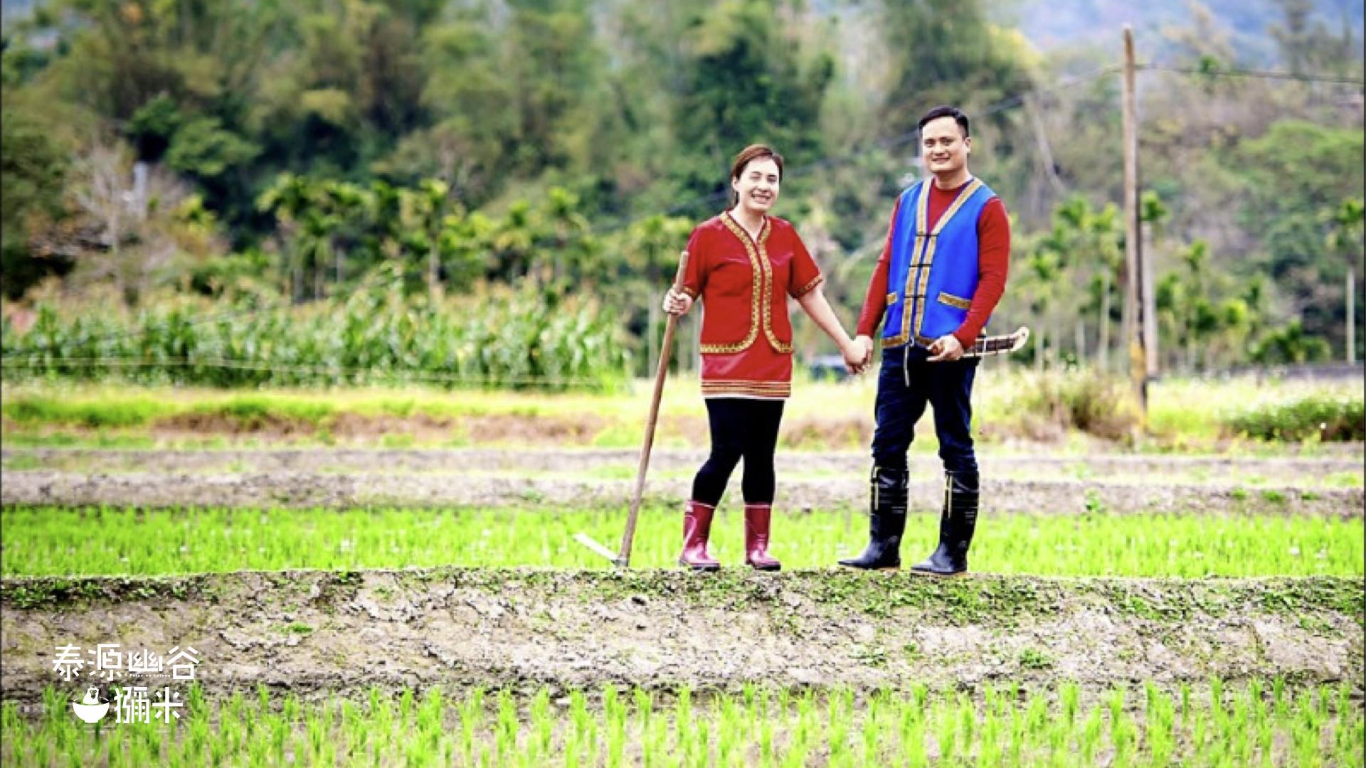 原住民耕作,種出天然小米以作成小米粽子