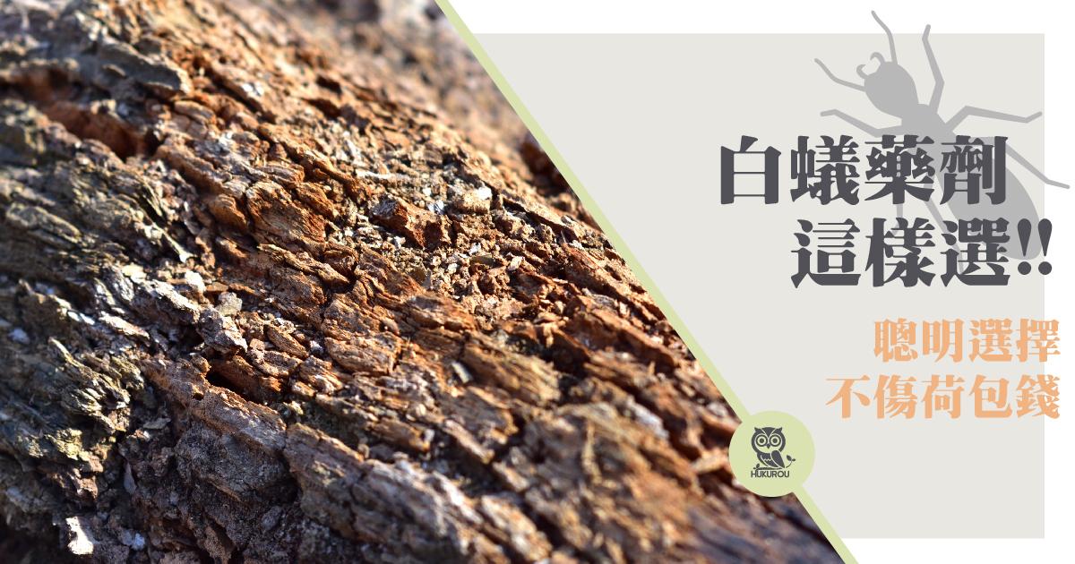 如何滅白蟻?高效滅白蟻藥價錢多少?