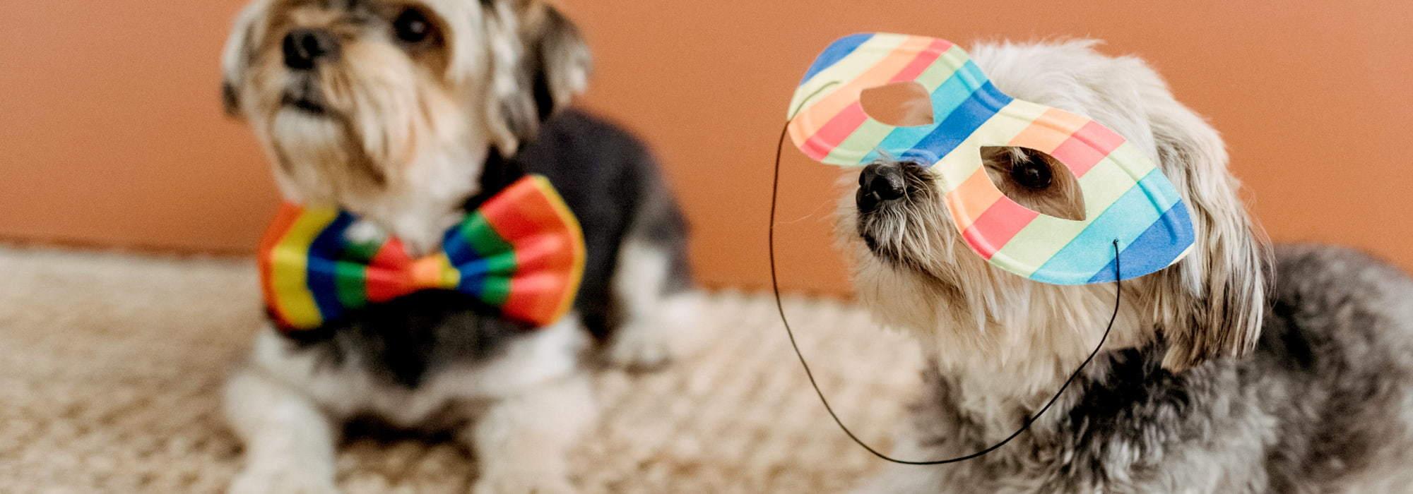 狗狗生日Party點慶祝?【3個寵物派對場地推介】|Kama Delivery到會外賣專家