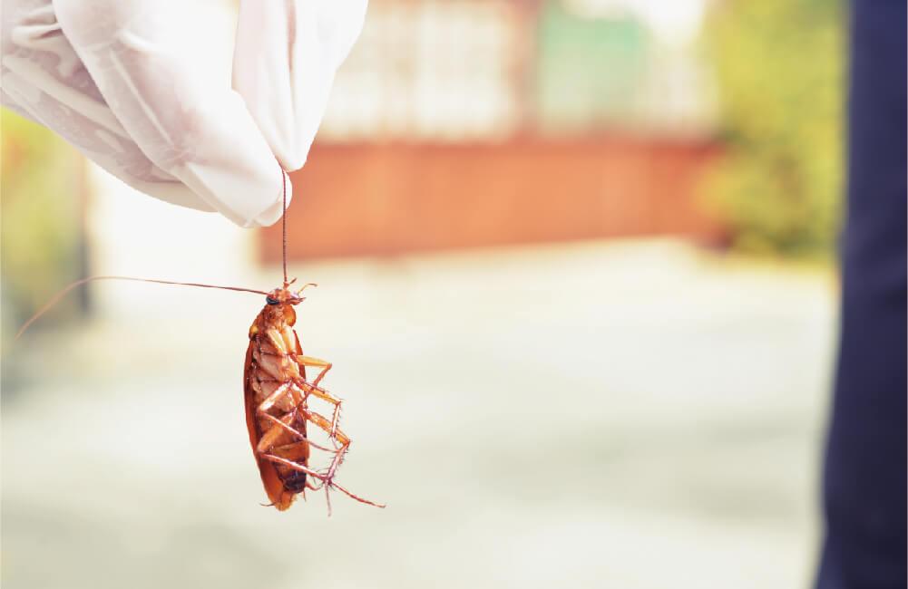 蟑螂凝膠是什麼