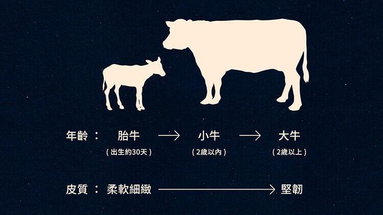 牛隻年齡與皮料皮質的變化圖