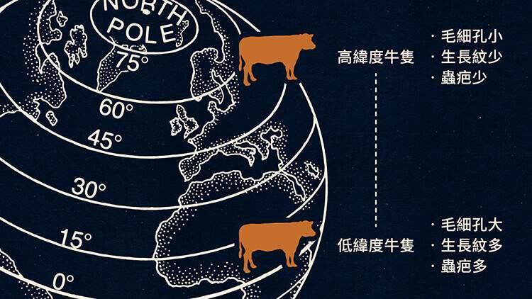 不同緯度的牛隻的皮革差異比較圖