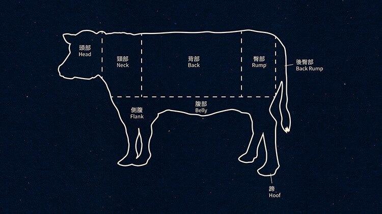 製鞋皮革在牛隻不同部位的名稱