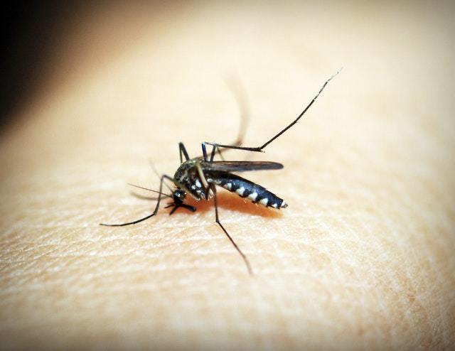 防蚊噴霧成分是什麼?ptt推薦的好用嗎?