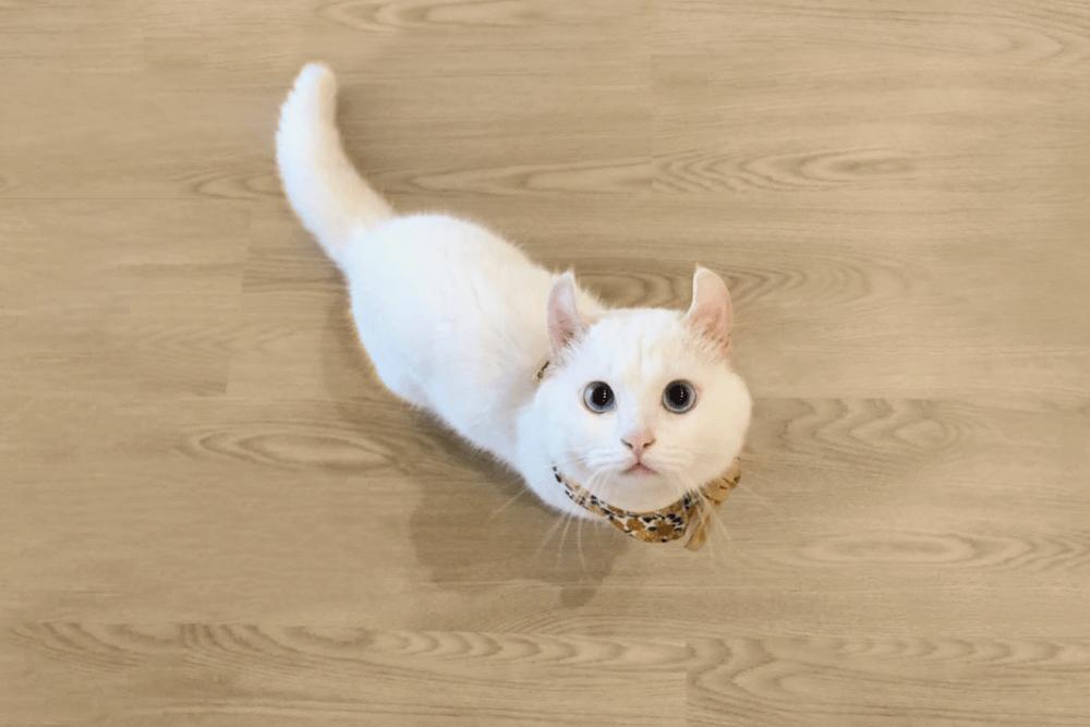 寵物空間適合SPC地板材質