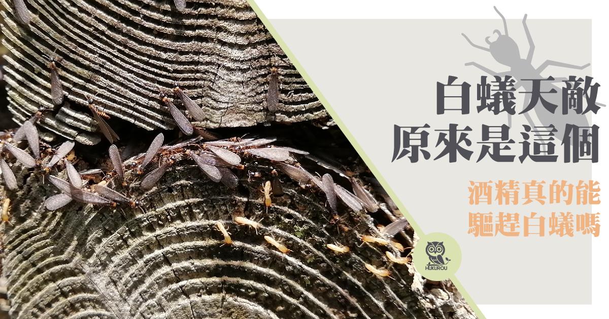白蟻怕什麼?精油、酒精還是其他味道?白蟻天敵是誰?
