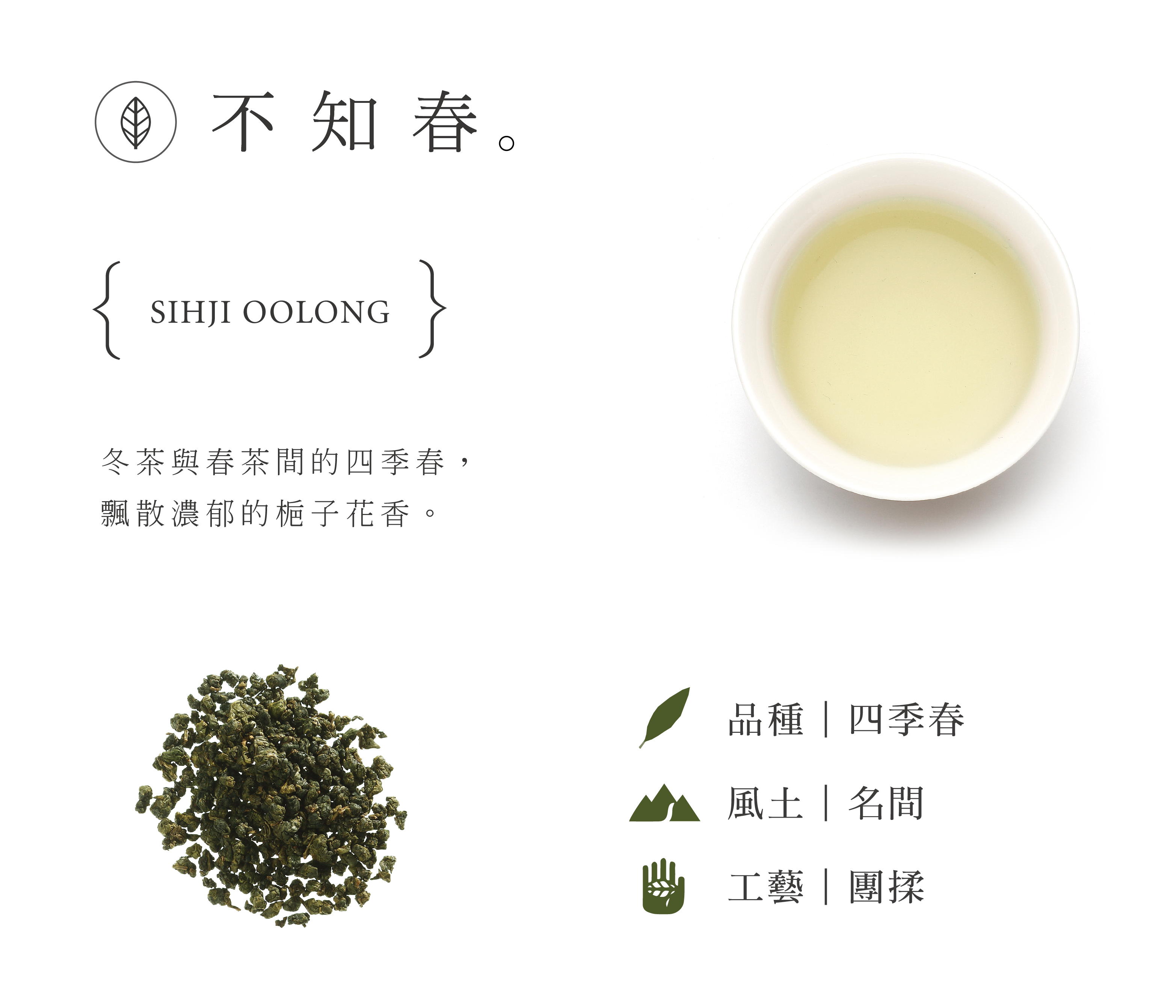 不知春 冬茶與春茶間的四季春,飄散濃郁的梔子花香。