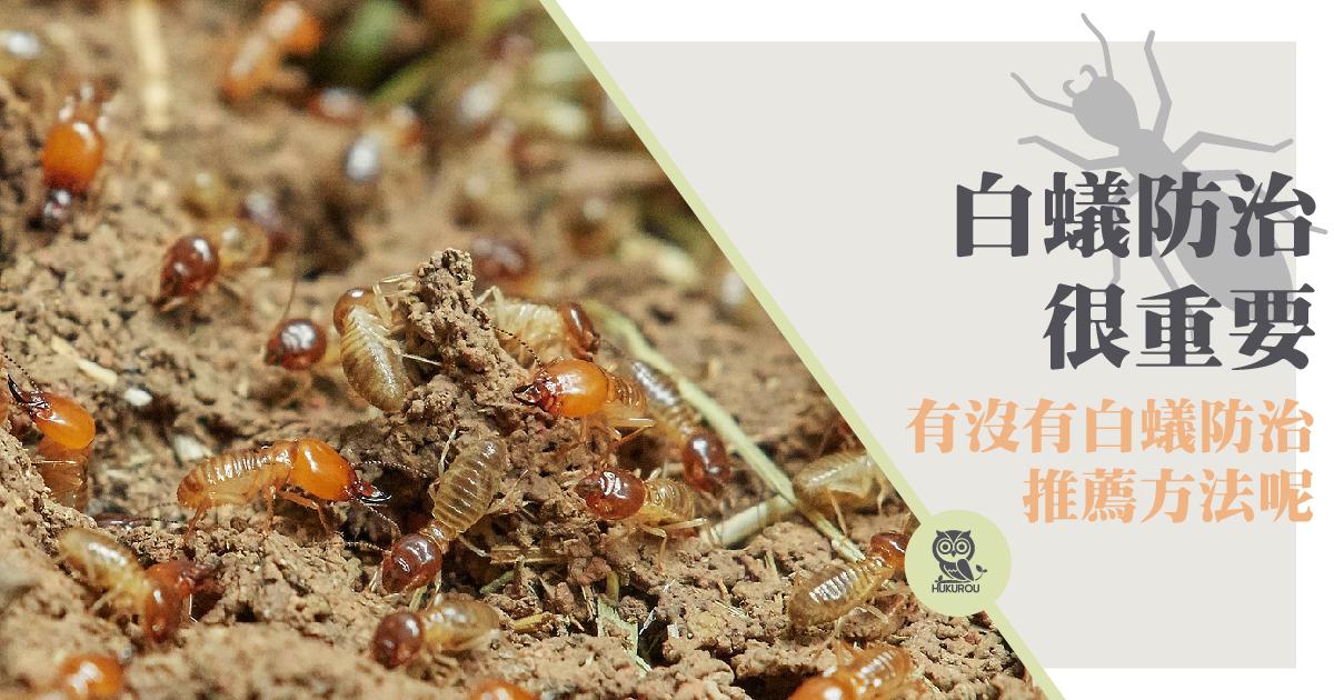 如何防白蟻?木頭防白蟻用護木油或精油就夠嗎?