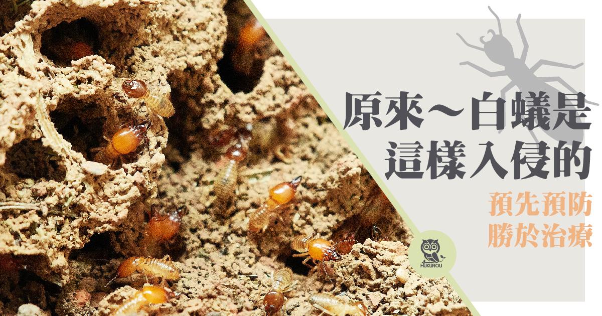 為什麼會有白蟻?讓白蟻專家教你在家防治