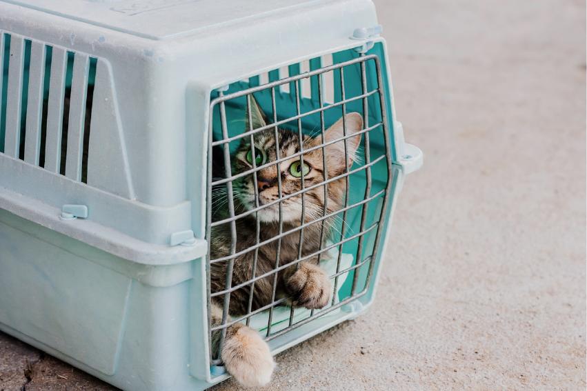 養貓準備用具:外出籠