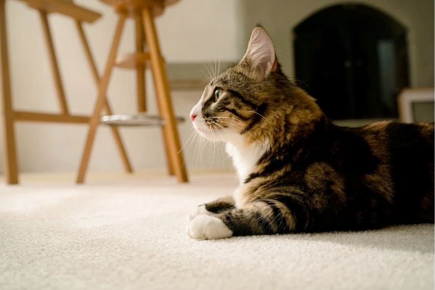 養寵物需要防水地毯嗎?