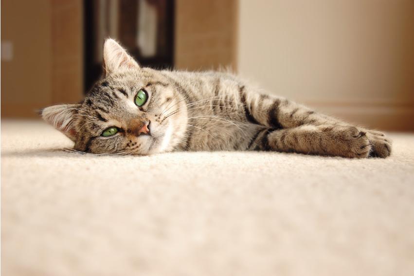 如何選購寵物墊才能讓毛孩開心又健康?