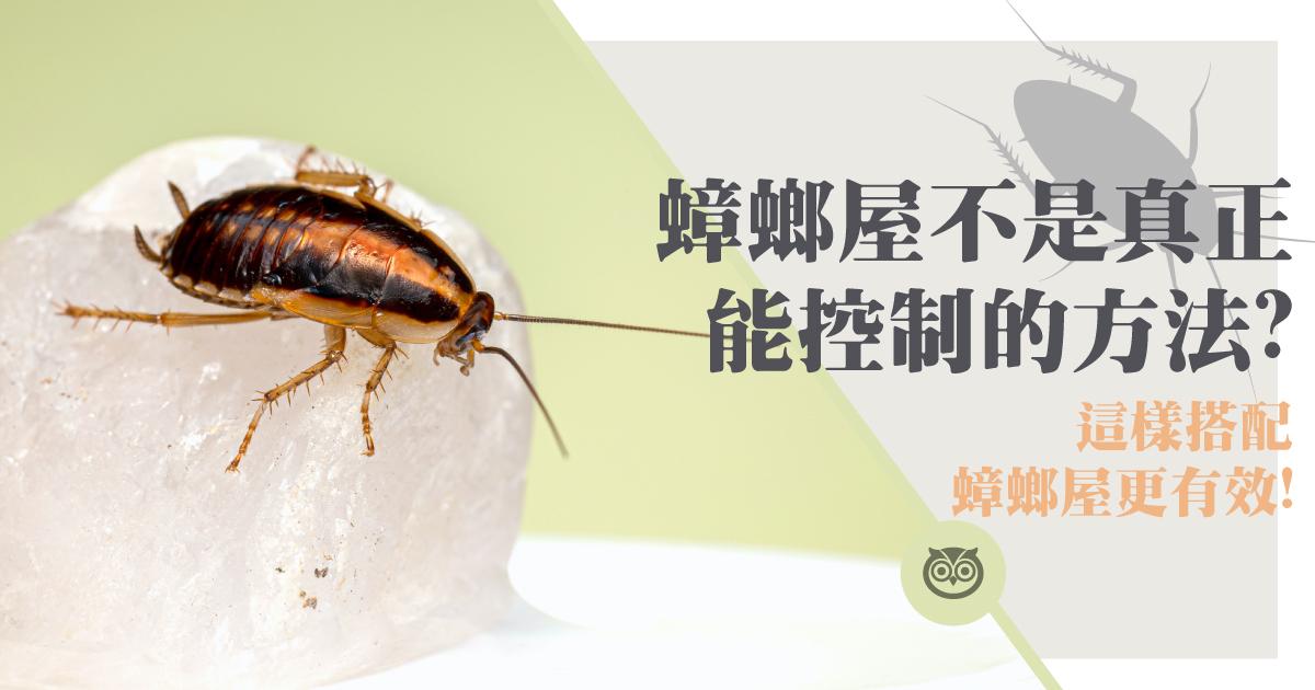 蟑螂屋有效嗎?蟑螂屋效果&推薦使用方式蟑螂屋有效嗎?蟑螂屋效果&推薦使用方式